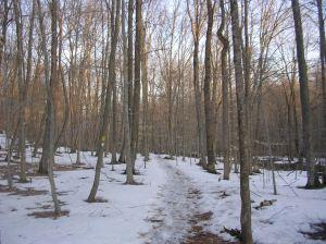 Saugatuck Trail in early April, Devil's Den, Weston CT