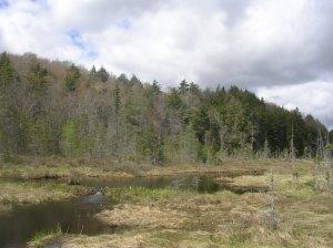 Vlei, Silver Lake Wilderness, Northville-Placid Trail
