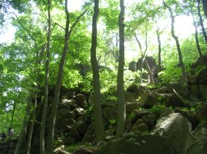 White trail, Sleeping Giant State Park, CT