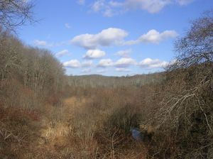 Trout Brook Valley Preserve, Easton / Weston CT