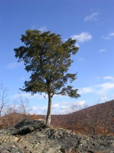 Hudson Highlands State Park