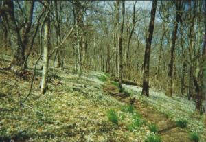 The trail to Gregory Bald, Great Smokies, April 2003.