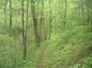 Hannah Mountain Trail, Great Smoky Mountains
