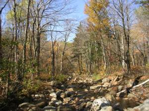 Wild River, Wild River Wilderness, White Mountains, New Hampshire