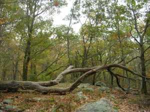 Hiltebeitel Trail in mid-October, Devil's Den, Weston.