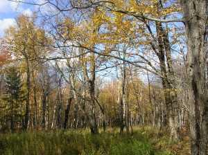 The Wild River Wilderness