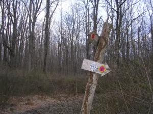 Trail markers at Bennett's Pond SP