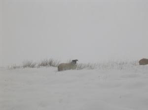 On a hillside above Loch Lomond.