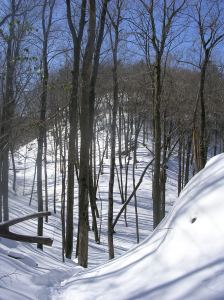 An up-and-down section of the violet trail