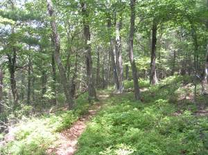 A Stretch of the Regicides Trail
