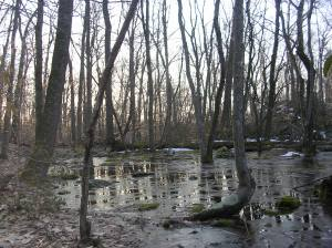 Swamp beside the Ambler Trail, Devil's Den