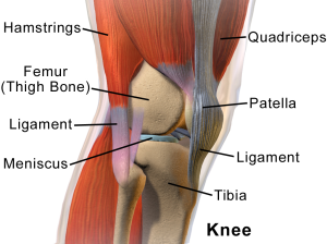 The human knee - courtesy Blausen.com staff