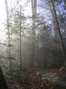 Misty Housatonic Range Trail