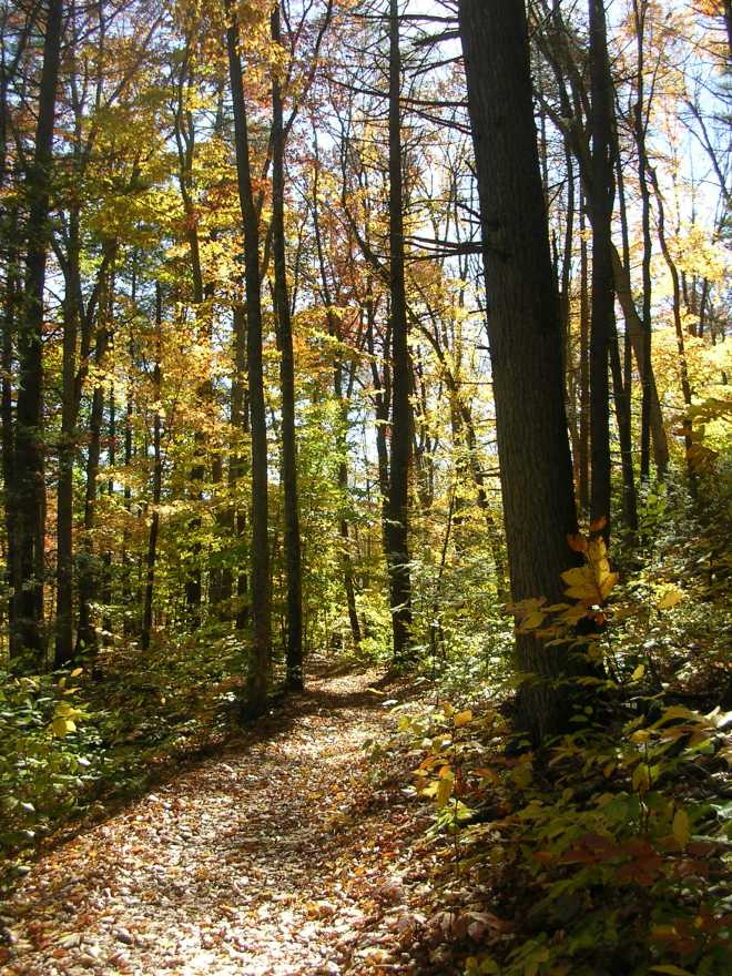 The Old Growth Forest Trail