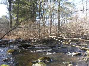 East Branch Naugatuck River