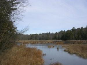 Swampy Pond on Torrington CT John Muir Trail