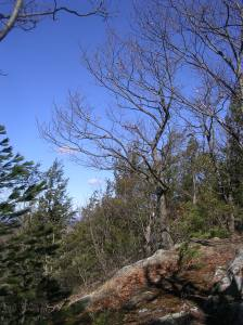 Metacomet Trail, Suffield