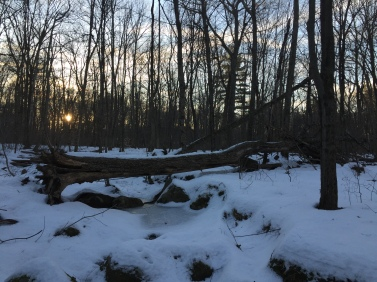 mohawk-state-forest-cornwall-at-sunrise