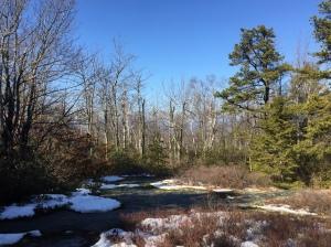 blueberry-run-trail-minnewaska-sp-preserve