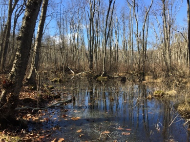 Zofnass Family Preserve, Eastern Loop wetland