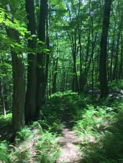 Early summer on the Saugatuck Trail