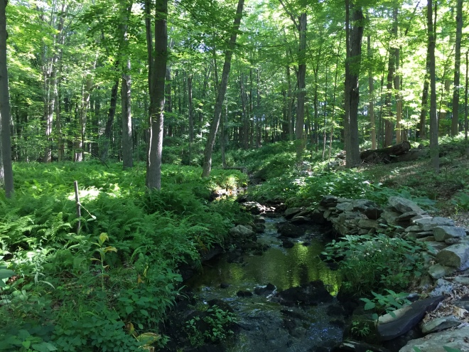 A brook on the Saugatuck Trail in Easton