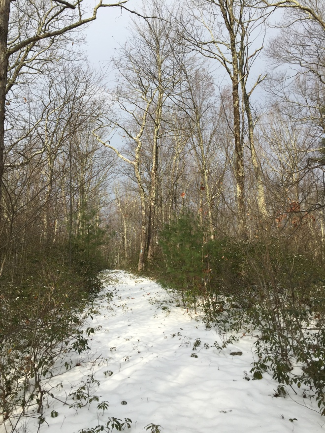 Forest Walk--The Mattatuck trail in Warren
