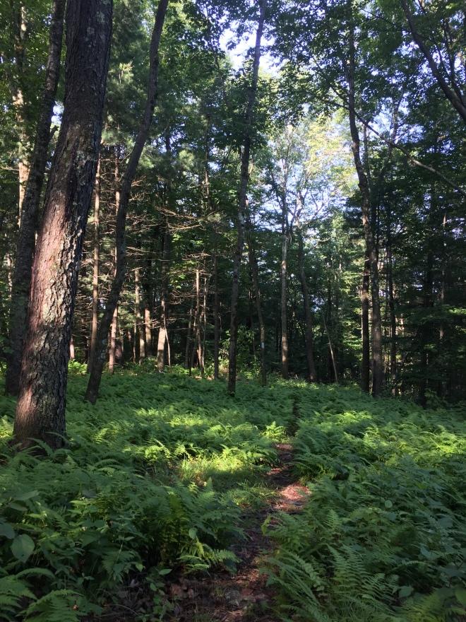 Mohawk Trail, Cornwall CT