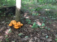 Fungi near Overlook