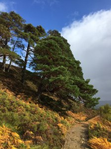 The track into Glen Affric
