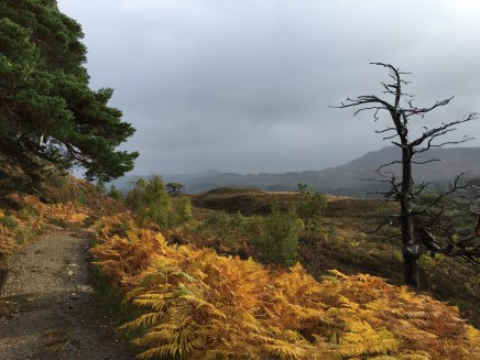 "Sunday: The track into Glen Affric—""sun and showers"""