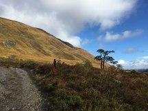 Steep slopes, nice pine