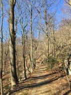 Nelsonville Trail toward Bull Hill