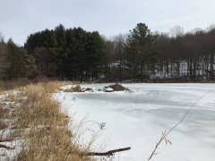 A corner of Granniss Pond with beaver lodge