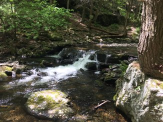 Brook in Sages Ravine