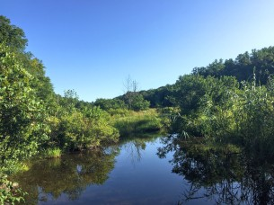 Aspetuck River—swampy section