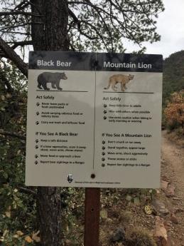 Chisos Mountains trailhead advice