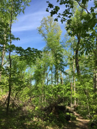 Downed timber, thinned canopy (Violet trail)