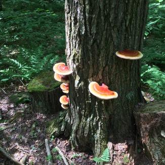 Catskills fungi