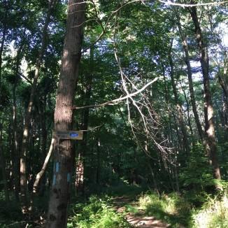 Mohawk-Mattatuck trails junction