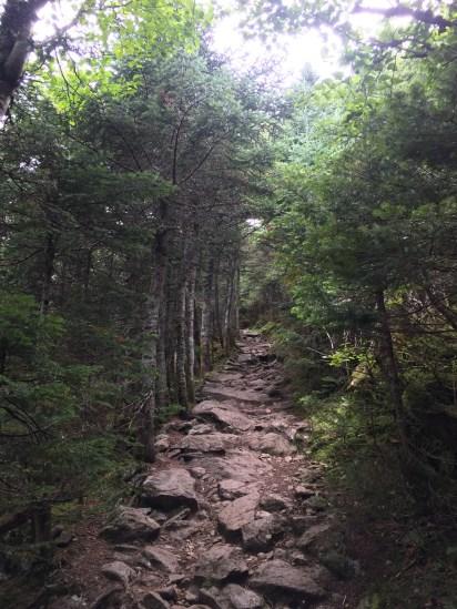 The Edmands Path