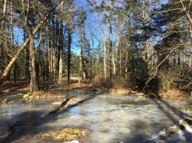 SECOND HIKE: Frozen swamp
