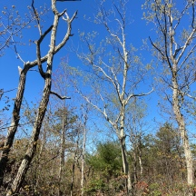 Cockaponset State Forest.