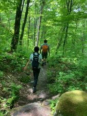 Back down in the hardwood forest